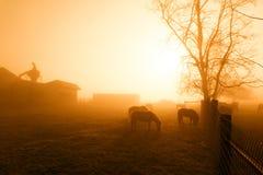 Pferde in Mornng-Nebel Stockbild