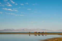 Pferde nähern sich Wasser Lizenzfreie Stockbilder