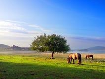 Pferde nahe Nanclares de Gamboa Lizenzfreies Stockbild