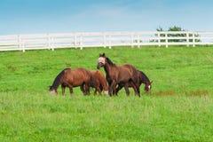 Pferde am Pferdebauernhof Ein sonniger Tag einer durchschnittlichen Zone von Russland Lizenzfreie Stockfotos