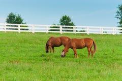 Pferde am Pferdebauernhof Ein sonniger Tag einer durchschnittlichen Zone von Russland Lizenzfreies Stockfoto