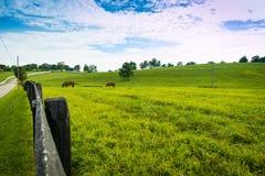 Pferde am Pferdebauernhof Ein sonniger Tag einer durchschnittlichen Zone von Russland Stockfotos