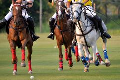 Pferde Polo Run In The Game stockbild