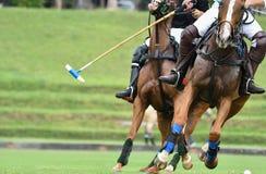 Pferde Polo Run In The Game stockfotografie