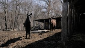Pferde sind auf dem Bauernhof stock footage