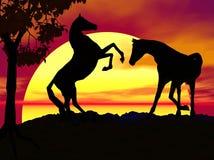 Pferde am Sonnenuntergang Stockbilder