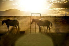Pferde am Sonnenuntergang Lizenzfreie Stockfotos