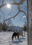 2017-02-10 Pferde u. Schnee Lizenzfreies Stockfoto