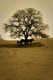 Pferde und bloßer Eichen-Baum Stockfotografie