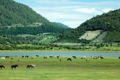 Pferde und der See Lizenzfreies Stockbild