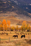 Pferde und Elch-Herde Lizenzfreies Stockfoto