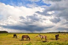 Pferde und Fohlen auf Weide unter stürmischem Himmel Lizenzfreies Stockbild