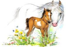 Pferde- und Fohlenmutterschaft Hintergrundgrußillustration Lizenzfreies Stockfoto