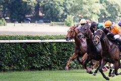 Pferde und Jockeys an einem Pferderennen Stockfotografie