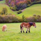 Pferde und Kühe, die in Pyrenäen-Wiesen bei Spanien weiden lassen Stockfotografie