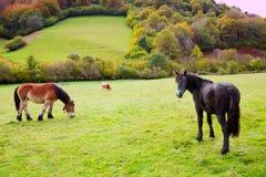 Pferde und Kühe, die in Pyrenäen-Wiesen bei Spanien weiden lassen Stockbilder
