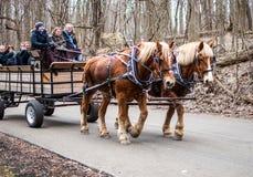 Pferde- und Lastwagenfahrt in Indiana USA stockbild