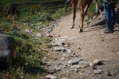 Pferde und Leute auf Gebirgsstraßen von Georgia stockfoto
