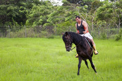 Pferde und Mitfahrer stockfotos