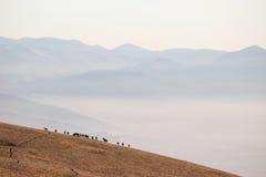 Pferde und Nebel Lizenzfreies Stockfoto