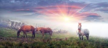 Pferde und Schafe an der Dämmerung Stockfotografie