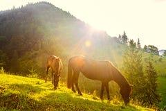 Pferde und sonniger Morgen in den Bergen Stockfotos