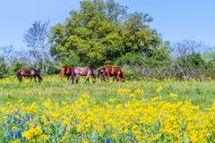 Pferde und Texas Wildflowers in einer Weide Stockfotografie