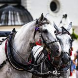 Pferde und Warenkörbe auf dem Markt in Krakau, Polen Lizenzfreie Stockbilder