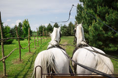 Pferde-und Warenkorb-Fahrt Stockbild