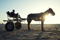 Pferde-und Warenkorb-Sonnenuntergang auf brasilianischem Strand Stockfotografie