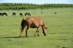 Pferde und Weide Stockbilder