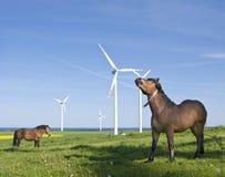 Pferde und Windturbinen Stockfotos