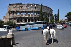 Pferde vor dem Lehnen von Colosseum Stockfotos