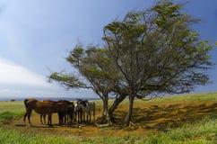 Pferde, Weide und Ozean Lizenzfreie Stockbilder