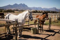 Pferde, welche die Ranch stehen stockfotografie