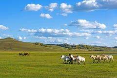 Pferde in WulanBu alles alte Schlachtfeld der Wiese Lizenzfreie Stockfotografie