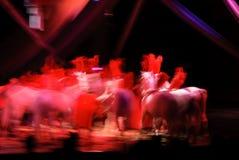 Pferde am Zirkus Lizenzfreies Stockbild