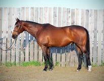 Pferdeanpassungs-Foto Stockfotografie
