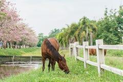 Pferdeartig auf Bauernhof mit grünem Gras, Landschaftsansicht stockfotografie