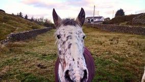 Pferdeartige Untersuchung? Stockfotografie
