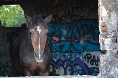 Pferdeaufstellung Stockbild