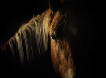 Pferdeauge in der Dunkelheit Stockbild