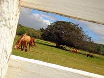 Pferdebauernhof in Hawaii lizenzfreie stockfotografie
