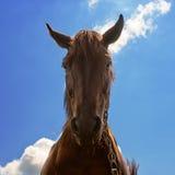 Pferdebauernhof, Nizza saubere Pferdeställe Lizenzfreies Stockbild