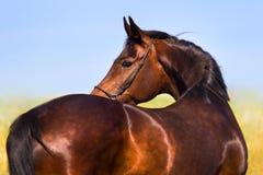 Pferdebauernhof, Nizza saubere Pferdeställe Stockfoto