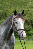 Pferdebauernhof, Nizza saubere Pferdeställe Stockfotografie