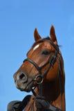 Pferdebauernhof, Nizza saubere Pferdeställe Lizenzfreie Stockfotografie