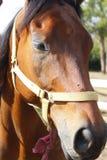 Pferdebauernhof, Nizza saubere Pferdeställe stockbilder