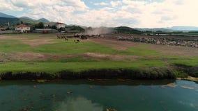 Pferdebauernhof - viele Pferde, die am Bauernhof weiden lassen stock footage