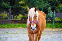 Pferdebauernhofbild Stockfoto